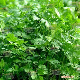Итальянский гигант семена петрушки листовой (Semenaoptom)