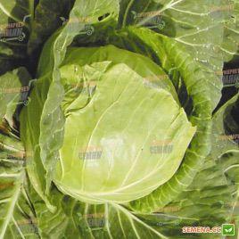 Июньская семена капусты б/к ранней (Semenaoptom)