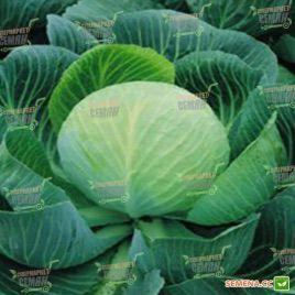 Колобок F1 семена капусты б/к поздней 115-125 дн. 2-3 кг (Semenaoptom)