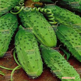 Конкурент семена огурца пчелоопыляемого среднего 50-55 дн. 9-12 см (Semenaoptom)