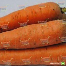 Курода семена моркови Шантане Италия (Semenaoptom)