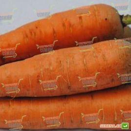 Курода семена моркови Шантане Италия ранней 85-90 дн. (Semenaoptom)