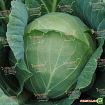 Лангедейкер Децема семена капусты б/к поздней (Semenaoptom)