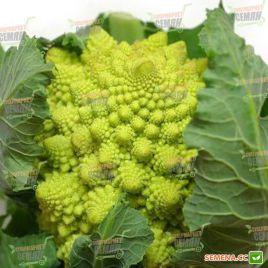 Лера семена капусты романеско (Semenaoptom)