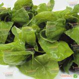 Матадор семена шпината (Semenaoptom)