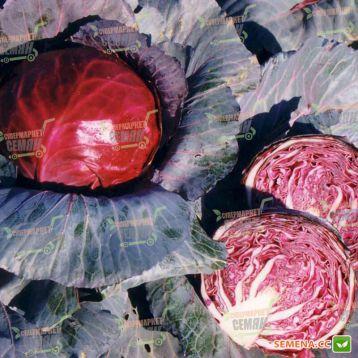 Редбол семена капусты к/к среднепоздней (Semenaoptom)