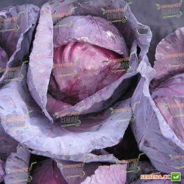 Редкеб семена капусты к/к среднепоздней 90-100 дн. 2-3 кг (Semenaoptom)