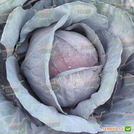 Ред семена капусты к/к среднепоздней (Semenaoptom)