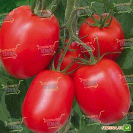 Рио Гранде семена томата дет. среднего 100 дн. слив. 90-100 гр. (Semenaoptom)
