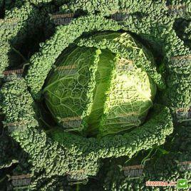 Серд семена капусты савойской средней 2,5-3,5 кг (Semenaoptom)