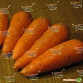 Шантане семена моркови Шантане Италия (Semenaoptom)