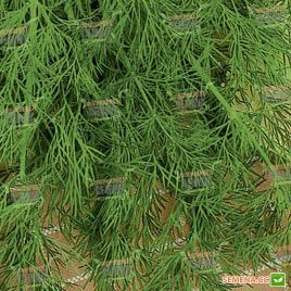 Шмарагд семена укропа (Semenaoptom)