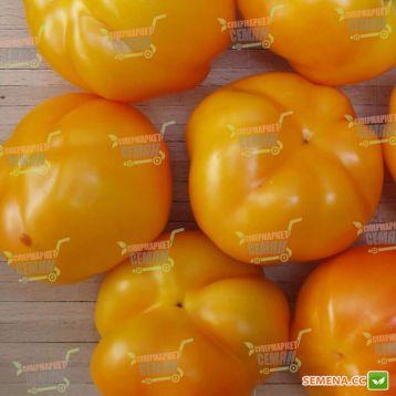 Солнышко семена перца сладкого тип Ротунда/Гогошара среднего 120 дн. окр. 100гр. 7-8мм зел./желт. (Semenaoptom)