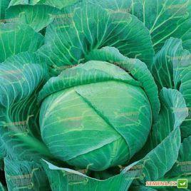 Триумф F1 семена капусты б/к поздней 120-125 дн. 5-7 кг (Semenaoptom)