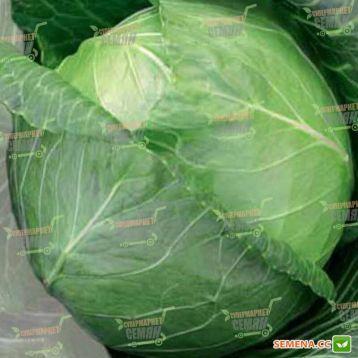 Тюркис семена капусты б/к поздней (Semenaoptom)