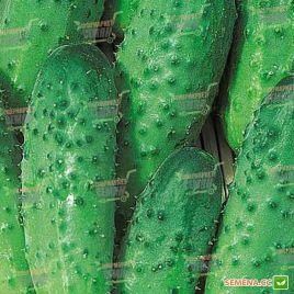 Взгляд F1 семена огурца пчелооп. раннего 45 дн. 9-11 см (Semenaoptom)