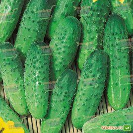 семена огурца задор f1