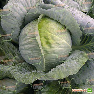 Доминанта F1 семена капусты б/к поздней 4-6 кг окр. (Semenaoptom) СНЯТО С ПРОИЗВОДСТВА