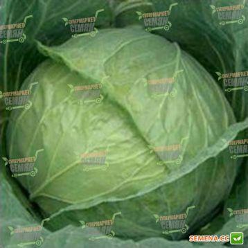 СБ-3 F1 семена капусты б/к средней (Semenaoptom)