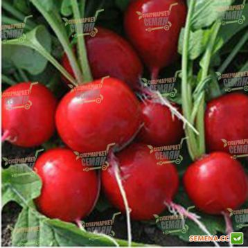 Сора семена редиса Украина (Semenaoptom)