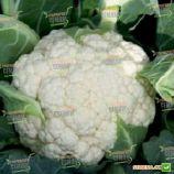 Аэроспейс F1 семена капусты цветной среднеранней 65-70 дн. 1,5 кг бел. (Syngenta)
