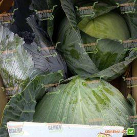 Агрессор F1 семена капусты б/к среднепоздней 110 - 120 дней 3-5 кг (Syngenta)