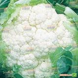 Америго F1 семена капусты цветной средней 80-85 дн. 2-3 кг бел. (Syngenta)