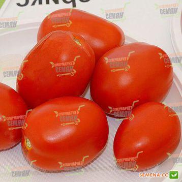 Астерікс F1 насіння томату дет. сливка середній дражировані (Syngenta)