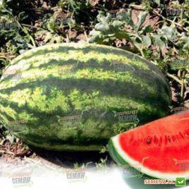 Астрахан F1 насіння кавуна тип Крімсон Світ середньоранній 78-80 днів 10-12 кг (Syngenta)