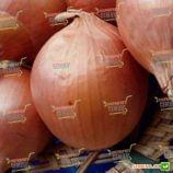 Банко семена лука репчатого позднего 115-120 дн. до 300 гр. желтого (Syngenta)