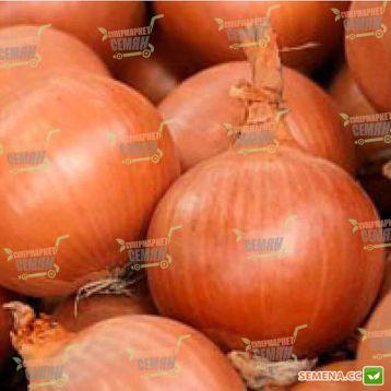 Боско F1 семена лука репчатого позднего 120-125 дн (Syngenta)