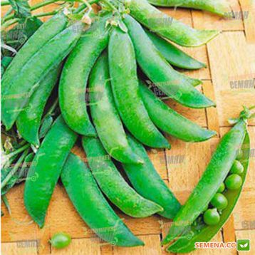 Бинго семена гороха овощного (Syngenta)