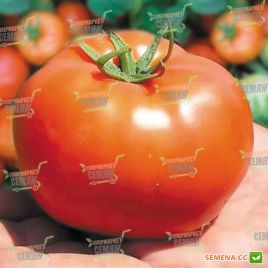 Бобкат F1 семена томата дет. среднеран. 60-65 дн. окр. 250-300 гр. (Syngenta)