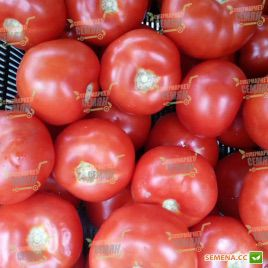 Бодерин F1 семена томата индет. раннего 60 дн. окр. 170-180 гр (Syngenta)
