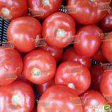 Бодерин F1 семена томата индет. раннего 105-115 дн. окр. 170-180 гр красный (Syngenta)