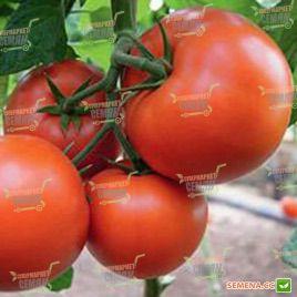 Бостина F1 семена томата индет. среднеранний 52-55 дн 200-220 гр (Syngenta)