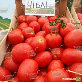 Чибли F1 семена томата дет. среднего 70 дн. слив. 100-120г (Syngenta)