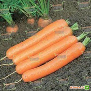 Дордонь F1 семена моркови Нантес (1,4-1,6) (Syngenta)