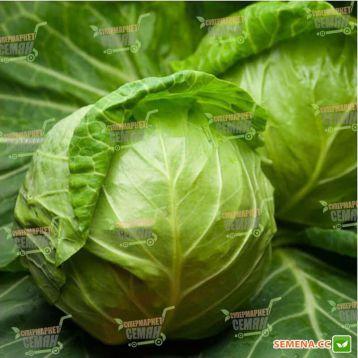 Джетодор F1 семена капусты б/к ультраранней 46-48 дн. 1,4-1,8 кг окр. (Syngenta)