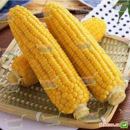 Джубили F1 семена кукурузы сладкой Su средней 81дн. 21см 16-20р. (Syngenta) НЕТ ТОВАРА
