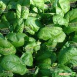 Ель Форте семена шпината (Syngenta)
