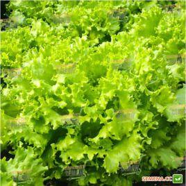 Фанли семена салата тип Батавия раннего 25-28 дн. зел. (Syngenta)