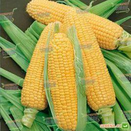 ГХ 6462 (GH 6462) F1 семена кукурузы сладкой Su средней 83 дн. 21см 20р. (Syngenta) НЕТ ТОВАРА