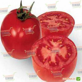 ГС 12 F1 (GS 12 F1) семена томата дет. раннего 50-55 дн. окр. 120-140 гр. (Syngenta)