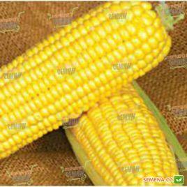 GSS 1453 F1 семена кукурузы суперсладкой (Syngenta)