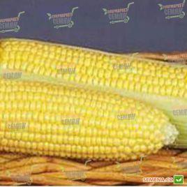 GSS 8529 F1 семена кукурузы суперсладкой (Syngenta)