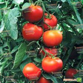 Гравитет F1 семена томата полудет. раннего 95-100 дн. окр. 180-200 гр (Syngenta)
