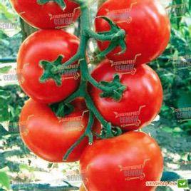 Ивет F1 семена томата полудет. 160-180 гр (Syngenta)