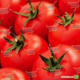 Кабинет F1 семена томата полудет. раннего 55 дн 140-160 гр (Syngenta)