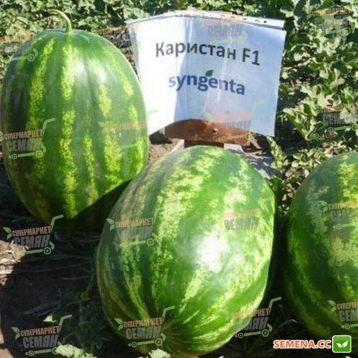 Каристан F1 семена арбуза тип кр.св. среднего 80-82 дня 9-12 кг овал. (Syngenta)